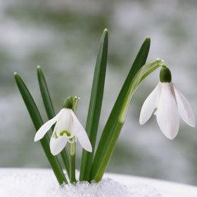 Végre! Itt van március, közeleg a tavasz!